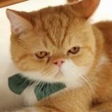 20 magnifiques chats roux en photos !