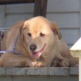 Il trouve une chienne allongée devant sa porte : le vétérinaire scanne sa puce et a du mal à y croire !