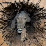 Un chien retrouvé « momifié » dans un tronc d'arbre