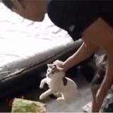 Il se filme sur Snapchat en train de frapper son chat, un petit détail de la vidéo glace le sang
