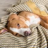Mon chien a un rhume : causes, symptômes, traitements
