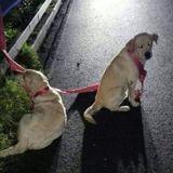 En pleine nuit, il voit 2 Labrador sur une voie rapide : il s'approche et son sang se fige...