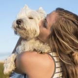 Les propriétaires de chiens embrassent plus leur animal que leur partenaire