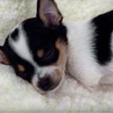 Ce chien devait être euthanasié à cause de son handicap : au dernier moment, tout a été bouleversé !