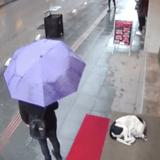 Sans savoir qu'il y a une caméra, elle s'approche d'un chien errant et laisse tout le monde sans voix