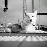 Une pétition lancée pour que la SNCF devienne un service animal-friendly