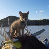 Au milieu de la rivière, il entend des bruits de chien : quelques minutes après, il comprend son erreur !