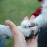 Une image peut prédire si vous êtes une personne à chats ou à chiens