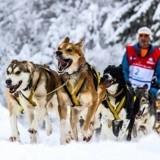 La Grande Odyssée 2018 : l'exceptionnelle course de chiens de traîneaux a commencé !
