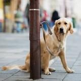 Elle adopte compulsivement des chiens et les abandonne, attachés à des poteaux