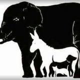 Saurez-vous retrouver tous les animaux présents sur cette image ?