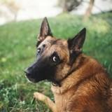 Les chiens sont-ils rancuniers?
