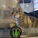 Mirabelle, un chaton abandonné devient la mascotte des policiers de Nancy
