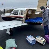 Etats-Unis : Un pilote transporte 51 chats à risque dans son avion pour une incroyable raison