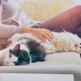 Quelles différences y a-t-il entre les propriétaires de chats et les propriétaires de chiens ?