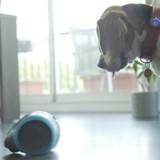 Le chien du créateur Marc Jacobs sort son premier livre