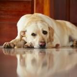 Laisser son chien seul toute la journée : voilà pourquoi c'est une mauvaise idée
