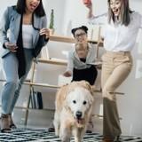 Comment la présence des chiens au bureau favorise la bienveillance entre collègues