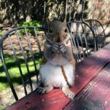 Elle sauve la vie d'un bébé écureuil, deux ans plus tard quelqu'un gratte à sa porte