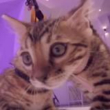 Des chats de la SPA réalisent le clip d'un célèbre chanteur français ! (Vidéo)