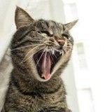 4 comportements du chat pouvant être liés à des troubles psychologiques