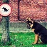 Exclu : La Mairie de Paris aurait trouvé le moyen de se débarrasser des crottes de chien !