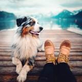 Les aliments crus sont-ils dangereux pour la santé des chiens et des chats ?