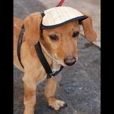 Saucisse, le chien comédien de Secret Story !