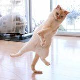 Il photographie son chat qui saute : le résultat est incroyable