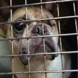 Le sauvetage de 41 chiens et chats dans un élevage insalubre de la Somme