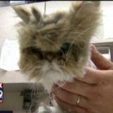 Photos choc : Un chat gravement négligé se bat pour la vie