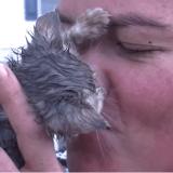 Ce chaton était en train de se noyer, mais une héroïne a tout fait pour le sauver