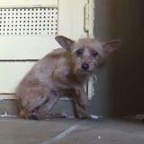 Poignant : le sauvetage d'Holly, une petite chienne errante terrifiée (Vidéo du jour)