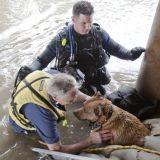 En photos, l'incroyable sauvetage d'un chien au bord de la noyade