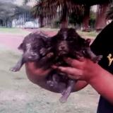 L'incroyable sauvetage de deux chiots bloqués sous terre (Vidéo du jour)