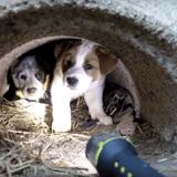 Il découvre une chienne morte au bord de la route : il va tout donner pour sauver ses 3 chiots (vidéo)