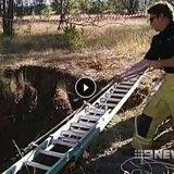 L'improbable sauvetage d'un chien et d'un koala tombés dans un trou