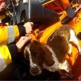 Le miraculeux sauvetage d'un chien bloqué sur une falaise depuis 10 jours (Vidéo)