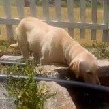 Perdu dans la montagne, ce jeune garçon a survécu grâce à un chien