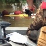 Des bénévoles héroïques sauvent deux pitbulls piégés par les inondations