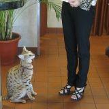 Et le plus grand chat du monde mesure...