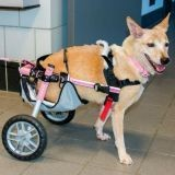 L'histoire incroyable de Scooter, ce chien aux pattes brisées sauvé par l'amour