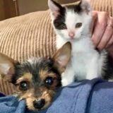 Un chaton et un chiot trouvés ensemble dans la rue ne se quittent plus