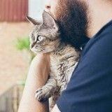 5 choses surprenantes que vous ne saviez pas sur les chats !