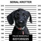 Votre chien, ce « Serial Krotter » : une campagne hilarante pour lutter contre les crottes de chiens