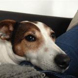 Une femme retrouve son chien volé grâce à la mobilisation des internautes