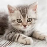 Les graves conséquences d'un sevrage du chaton trop précoce