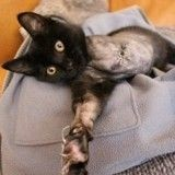 Un chat noir amputé d'une patte réclame des caresses après son sauvetage miraculeux