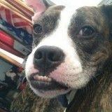 Sourd et malade, ce chien a été un héros toute sa vie !