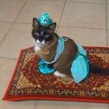 Regardez ce chat se balader sur son tapis volant ! (Vidéo du jour)